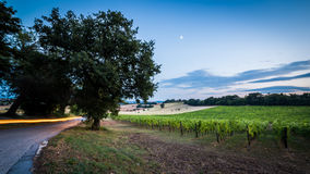 Evening in the vineyard Royalty Free Stock Images