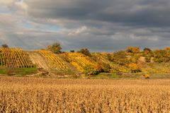 Evening on vineyards in the Czech Republic. Cloudy. Wine growing. Wine country. Stock Photo