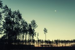 Evening Vintage Landscape with Forest and Moon. Evening vintage landscape with silhouette of forest and moon in twilight sky Royalty Free Stock Photography