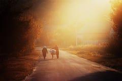 Evening walk Stock Photo
