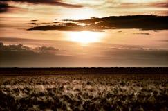 Evening wheat field. summer landscape Stock Photo