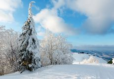 Winter mountain snowy landscape. Evening winter calm mountain landscape with beautiful frosting trees and snowdrifts on slope Carpathian Mountains, Ukraine Royalty Free Stock Images
