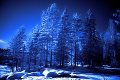 Evening in winter forest Stock Photography