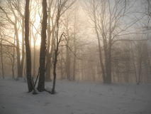 Evening in the winter forest. In Crimea mountains Stock Photos