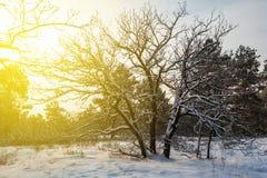 Evening winter forest Stock Photos