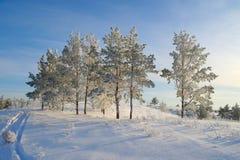Evening winter landscape Stock Image