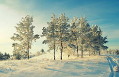 Evening winter landscape Royalty Free Stock Images