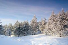 Evening winter landscape Stock Photos