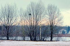 Evening winter landscape with trees Royalty Free Stock Images