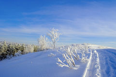 Evening winter landscape Royalty Free Stock Photo