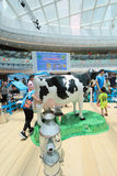 Event of Dutch Lady Pure Animal Husbandry Farm in Hong Kong Stock Photography
