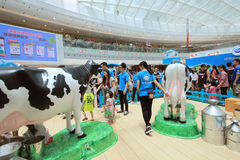 Event of Dutch Lady Pure Animal Husbandry Farm in Hong Kong Royalty Free Stock Images