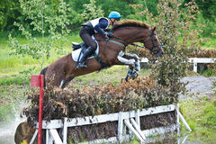 Eventer on horse jumping over hurdel Royalty Free Stock Image