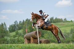 Eventer na koniu jest pokonuje beli ogrodzenie zdjęcie stock