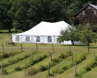 Eventi bianchi o tenda di nozze Fotografie Stock