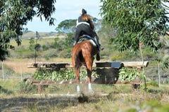 Eventing骑马者的后侧方 免版税库存图片