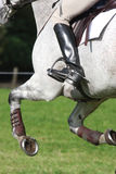 Eventing Photo stock