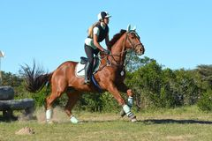 Eventing horse galloping Stock Photo