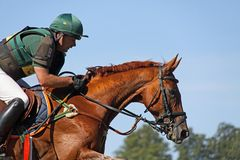 Eventing Michael Ryan Photo stock