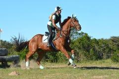 Eventing-Pferdegaloppieren Stockfoto