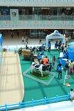 Evento da exploração agrícola da produção animal de Hong Kong Dutch Lady Pure Foto de Stock Royalty Free