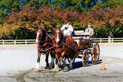 Evento de James River Driving Association en Staunton Va Fotografía de archivo