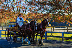 Evento de James River Driving Association en Staunton Va Imágenes de archivo libres de regalías