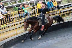 Evento de la demostración del caballo de Taiwán Fotografía de archivo