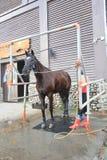 Evento de la demostración del caballo de Taiwán Foto de archivo libre de regalías