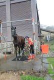 Evento de la demostración del caballo en Taiwán Imagen de archivo