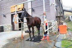 Evento de la demostración del caballo en Taiwán Imágenes de archivo libres de regalías