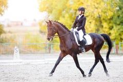 Evento desportivo equestre na queda com espaço da cópia fotos de stock