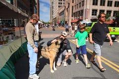 Evento di adozione dell'animale domestico Immagine Stock Libera da Diritti