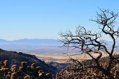 In evenwicht brengende Rotsen en Ongeluksboden van de Chiricahua-bergen van Chiricahua Apaches stock fotografie