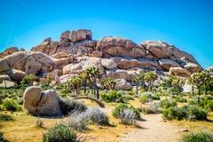 In evenwicht brengende woestijnrotsen in Joshua National Park, Californië stock foto's