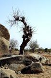 Evenwichtige rotsen in Afrika stock afbeeldingen