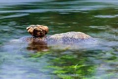 Evenwichtige stenen op Waterstroom Stock Foto's