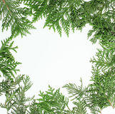 Ever green fir tree decoration for christmas card Royalty Free Stock Image
