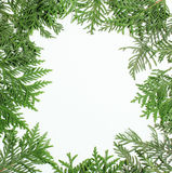 Ever green fir tree decoration for christmas card isolated, new year pattern, copyspace white Stock Photo