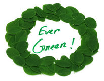 Ever Green written in Moringa leaves frame Stock Photos
