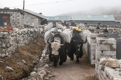 EVEREST ΣΤΡΑΤΟΠΕΔΟ TREK/NEPAL ΒΑΣΕΩΝ - 22 ΟΚΤΩΒΡΊΟΥ 2015 Στοκ εικόνες με δικαίωμα ελεύθερης χρήσης