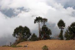 everest marque le voyage d'arbres de prière du Népal Photos stock