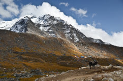 Everest trail landscape Royalty Free Stock Photos