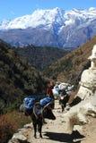 Everest Treking Stock Fotografie