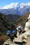 Everest Trekking Stock Photography