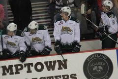 Everett Silvertips Royalty-vrije Stock Foto's