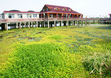 Everglade scenic. Jiulongkou everglade scenic in Jiangsu Province in China Royalty Free Stock Image