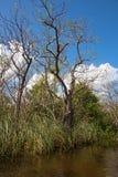 everglades стоковое фото