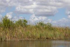 everglades стоковое фото rf