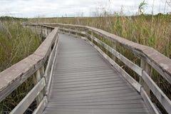 Everglades εθνικό. Πάρκο, ίχνος Anhinga Στοκ φωτογραφίες με δικαίωμα ελεύθερης χρήσης